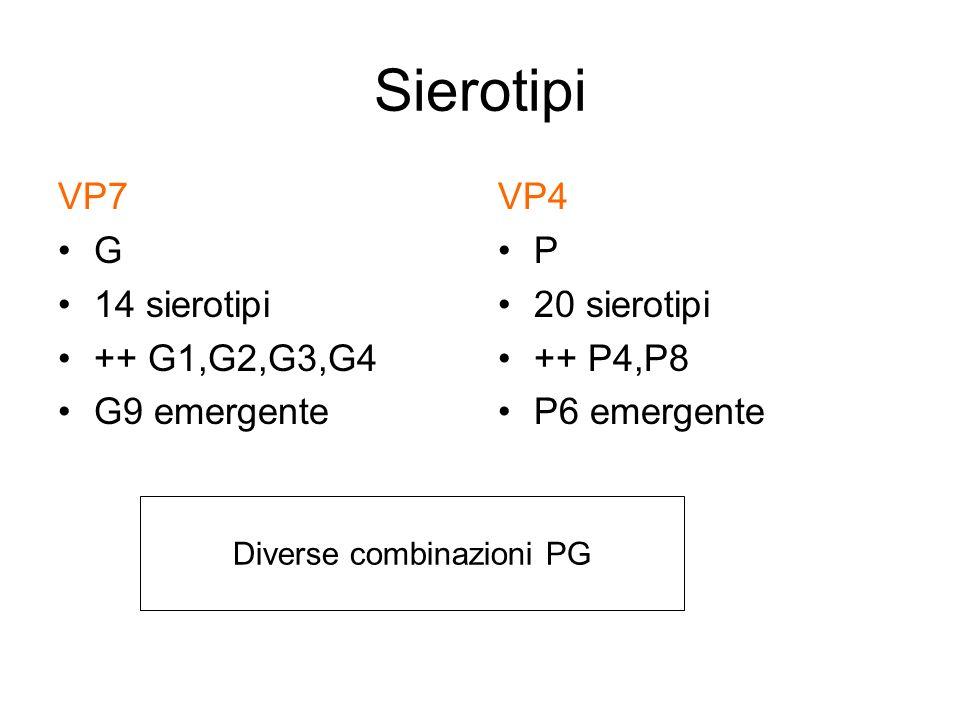 Sierotipi VP7 G 14 sierotipi ++ G1,G2,G3,G4 G9 emergente VP4 P 20 sierotipi ++ P4,P8 P6 emergente Diverse combinazioni PG
