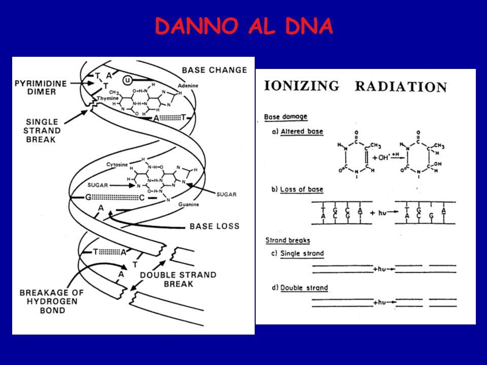 DANNO AL DNA