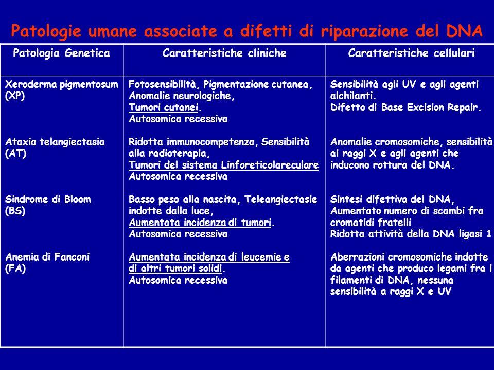 Patologia GeneticaCaratteristiche clinicheCaratteristiche cellulari Xeroderma pigmentosum (XP) Ataxia telangiectasia (AT) Sindrome di Bloom (BS) Anemia di Fanconi (FA) Fotosensibilità, Pigmentazione cutanea, Anomalie neurologiche, Tumori cutanei.