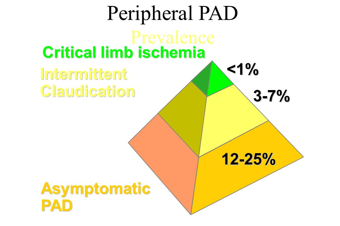 Peripheral PAD Prevalence Asymptomatic PAD Intermittent Claudication 12-25% 3-7%<1% Critical limb ischemia
