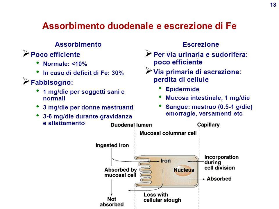 17 Lattoferrina Simile a Tf, presente nel latte, facilita il trasferimento di Fe +++ nellintestino dei lattanti Sottrae Fe +++ alla flora intestinale: Effetto antimicrobico