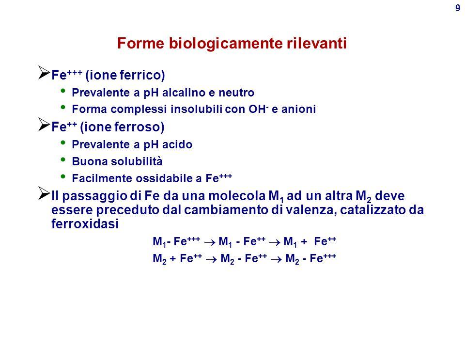 8 Distribuzione di Fe nellorganismo 3-5 g/70 kg: 68% in Emoglobina 4% in Mioglobina 0.1% in Transferrina 27% in Ferritina tissutale 0.004% in Ferritina plasmatica 0.6% in vari enzimi