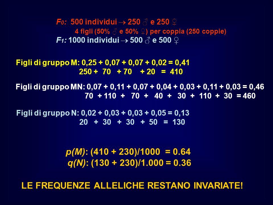p(M): (410 + 230)/1000 = 0.64 q(N): (130 + 230)/1.000 = 0.36 Figli di gruppo M: 0,25 + 0,07 + 0,07 + 0,02 = 0,41 250 + 70 + 70 + 20 = 410 F 0 : 500 in