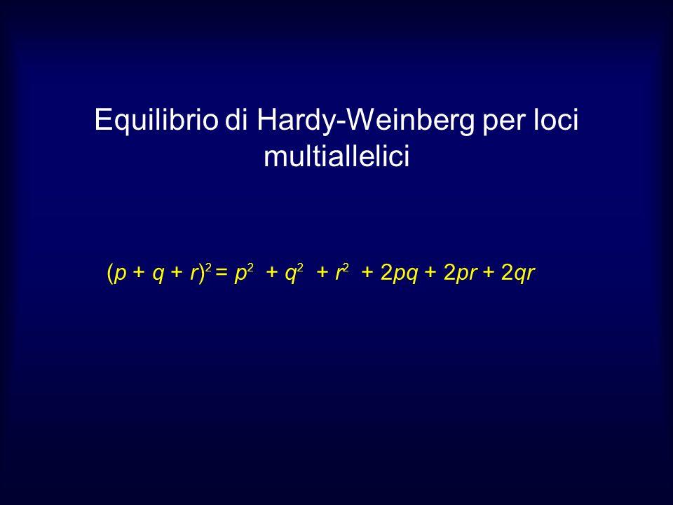 (p + q + r) 2 = p 2 + q 2 + r 2 + 2pq + 2pr + 2qr Equilibrio di Hardy-Weinberg per loci multiallelici