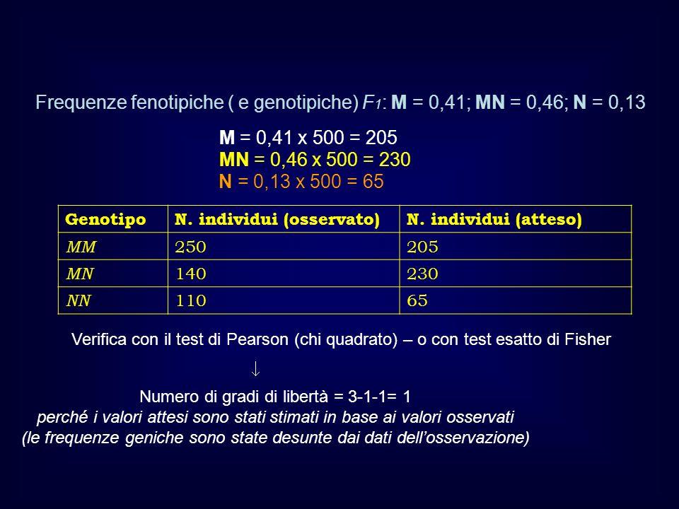 GenotipoN. individui (osservato)N. individui (atteso) MM 250205 MN 140230 NN 11065 Frequenze fenotipiche ( e genotipiche) F 1 : M = 0,41; MN = 0,46; N