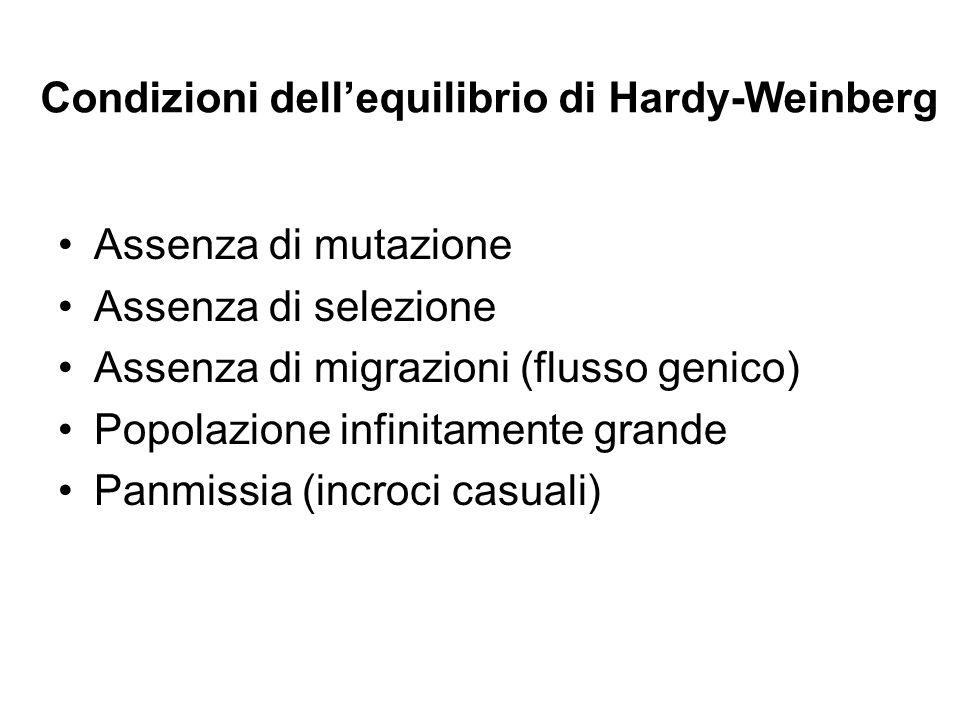 Condizioni dellequilibrio di Hardy-Weinberg Assenza di mutazione Assenza di selezione Assenza di migrazioni (flusso genico) Popolazione infinitamente