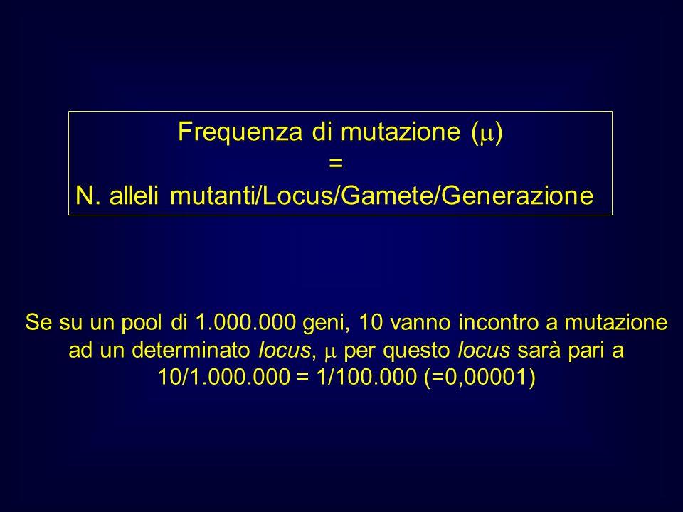 Frequenza di mutazione ( ) = N. alleli mutanti/Locus/Gamete/Generazione Se su un pool di 1.000.000 geni, 10 vanno incontro a mutazione ad un determina