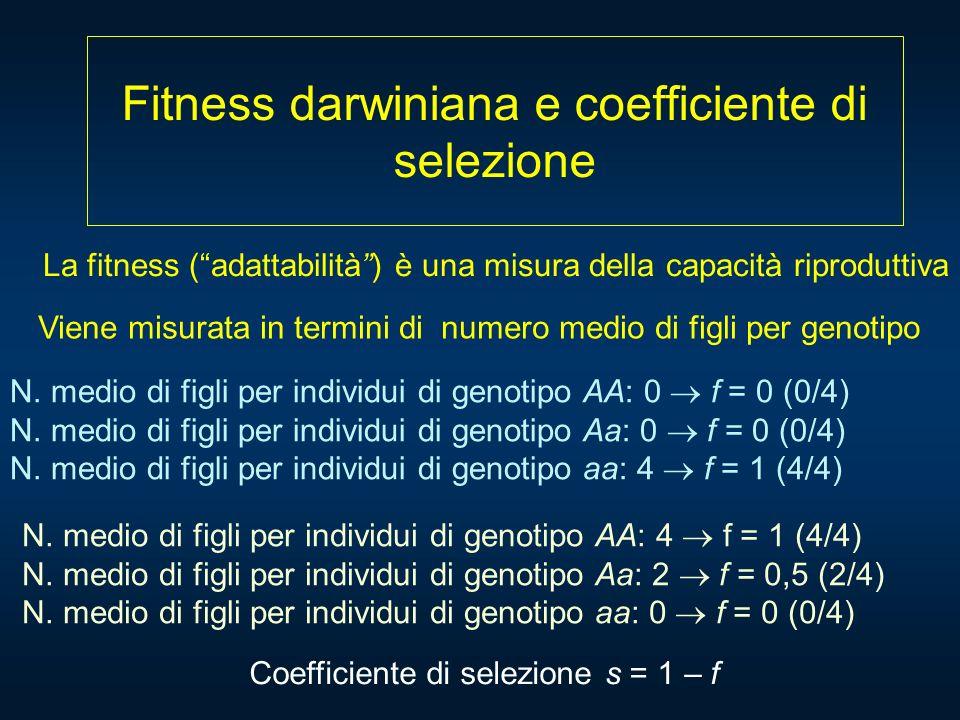 Fitness darwiniana e coefficiente di selezione La fitness (adattabilità) è una misura della capacità riproduttiva Viene misurata in termini di numero