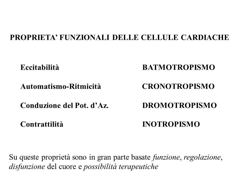 Eccitabilità BATMOTROPISMO Automatismo-Ritmicità CRONOTROPISMO Conduzione del Pot. dAz. DROMOTROPISMO Contrattilità INOTROPISMO PROPRIETA FUNZIONALI D