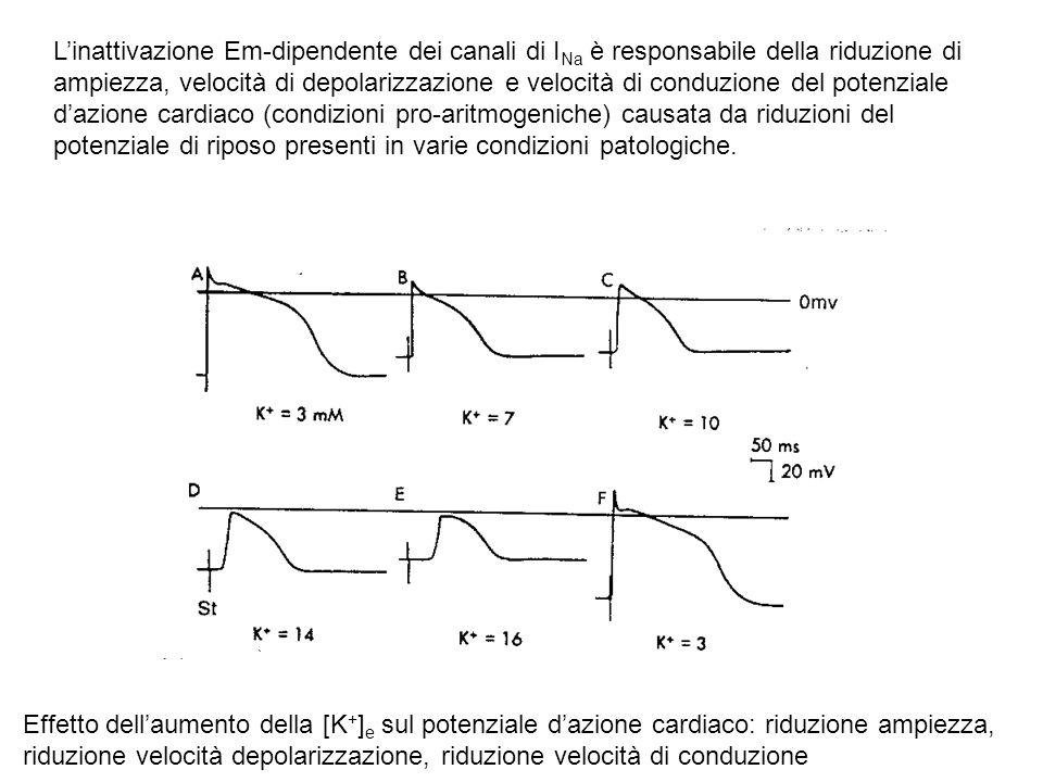 Linattivazione Em-dipendente dei canali di I Na è responsabile della riduzione di ampiezza, velocità di depolarizzazione e velocità di conduzione del