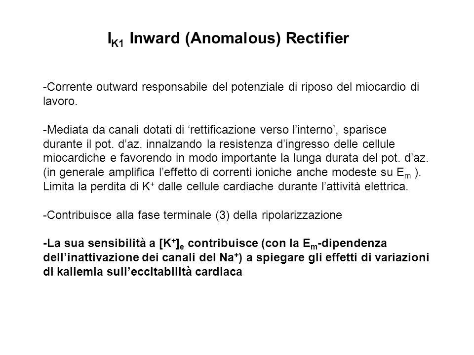 I K1 Inward (Anomalous) Rectifier -Corrente outward responsabile del potenziale di riposo del miocardio di lavoro. -Mediata da canali dotati di rettif