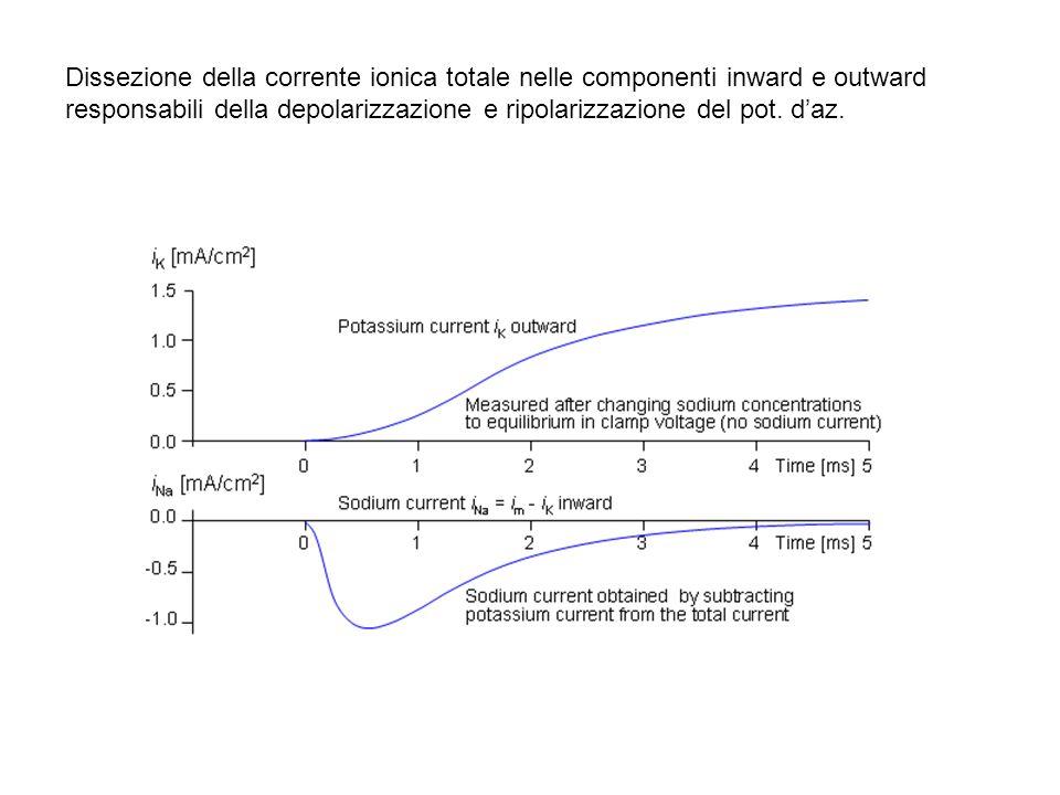 Dissezione della corrente ionica totale nelle componenti inward e outward responsabili della depolarizzazione e ripolarizzazione del pot. daz.