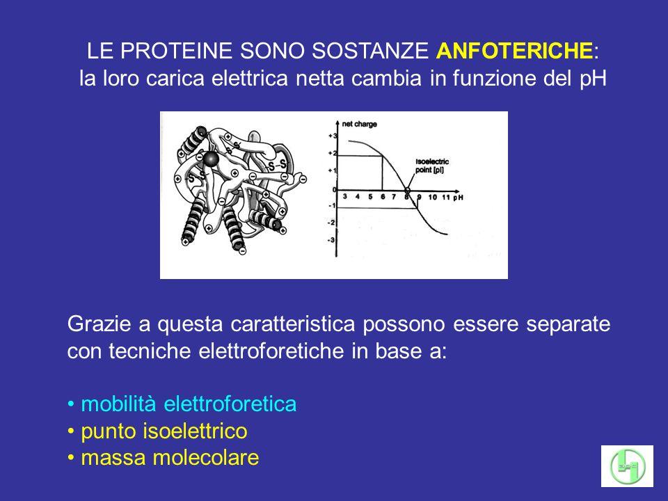LE PROTEINE SONO SOSTANZE ANFOTERICHE: la loro carica elettrica netta cambia in funzione del pH Grazie a questa caratteristica possono essere separate