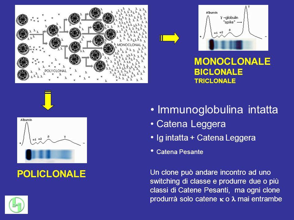 POLICLONALE MONOCLONALE BICLONALE TRICLONALE Immunoglobulina intatta Catena Leggera Ig intatta + Catena Leggera Catena Pesante Un clone può andare inc