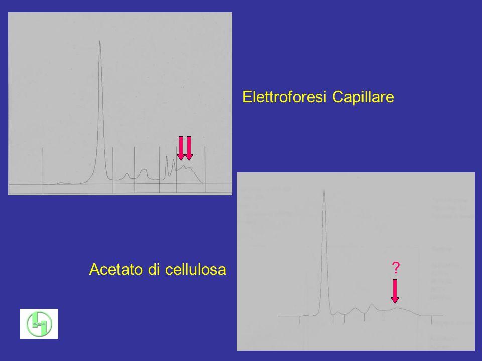 Elettroforesi Capillare Acetato di cellulosa ?