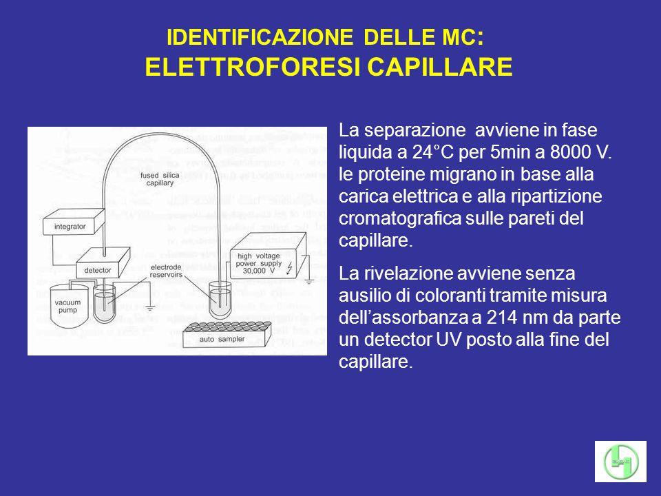 IDENTIFICAZIONE DELLE MC : ELETTROFORESI CAPILLARE La separazione avviene in fase liquida a 24°C per 5min a 8000 V. le proteine migrano in base alla c