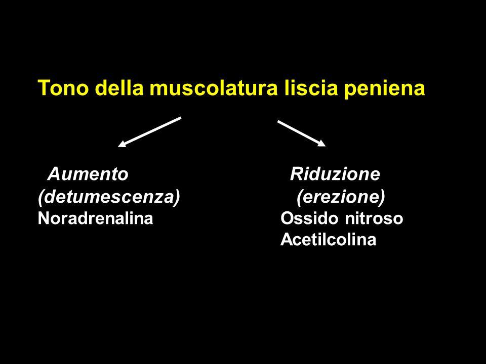 Tono della muscolatura liscia peniena Aumento Riduzione (detumescenza) (erezione) NoradrenalinaOssido nitroso Acetilcolina