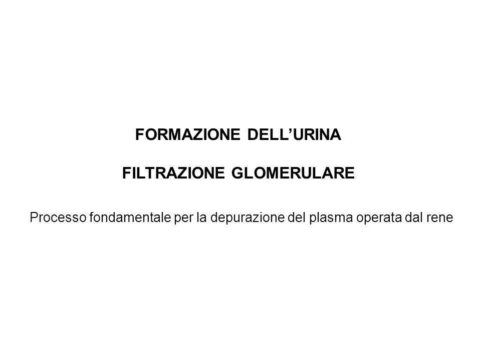FORMAZIONE DELLURINA FILTRAZIONE GLOMERULARE Processo fondamentale per la depurazione del plasma operata dal rene