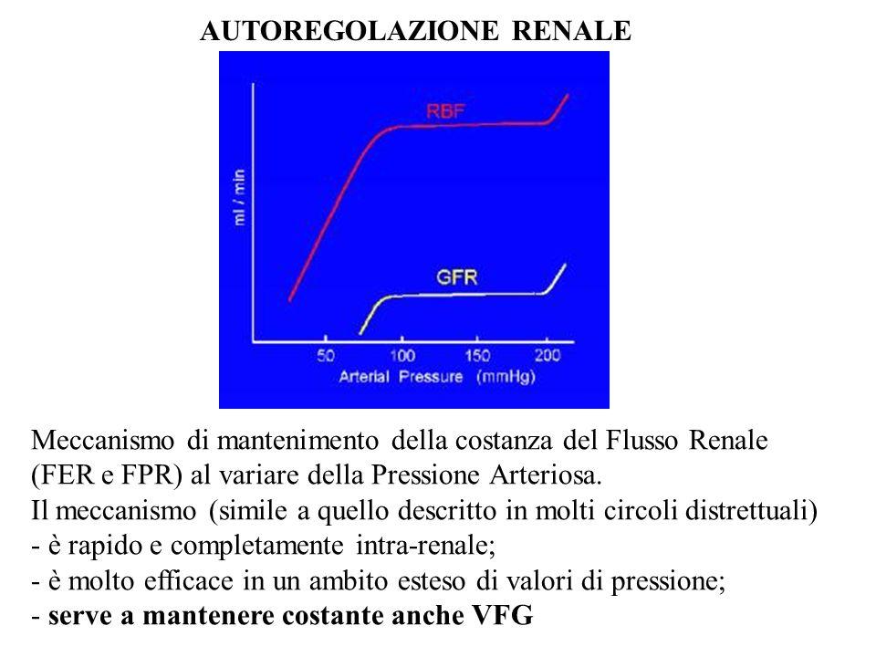 AUTOREGOLAZIONE RENALE Meccanismo di mantenimento della costanza del Flusso Renale (FER e FPR) al variare della Pressione Arteriosa. Il meccanismo (si