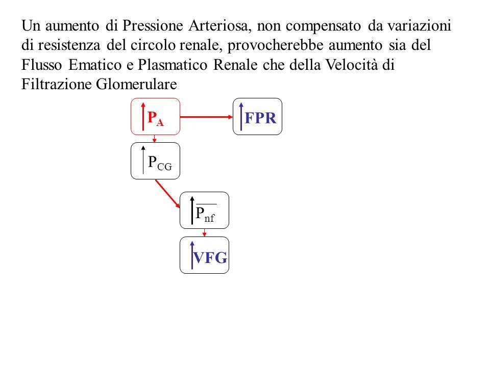 PAPA P CG FPR P nf VFG Un aumento di Pressione Arteriosa, non compensato da variazioni di resistenza del circolo renale, provocherebbe aumento sia del