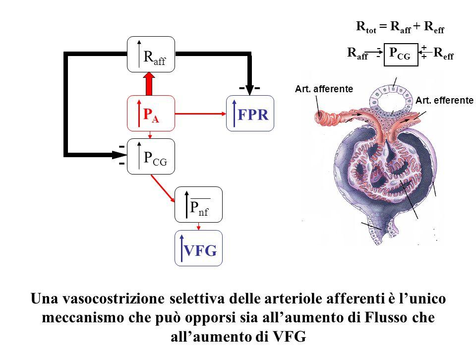 PAPA P CG FPR P nf VFG R aff - ---- Una vasocostrizione selettiva delle arteriole afferenti è lunico meccanismo che può opporsi sia allaumento di Flus