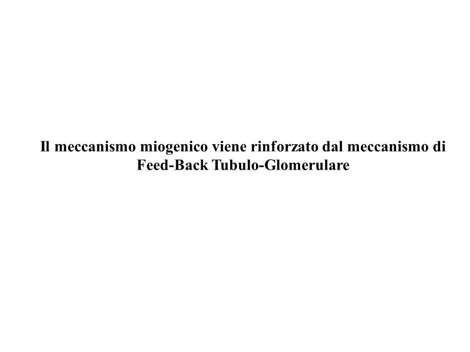 Il meccanismo miogenico viene rinforzato dal meccanismo di Feed-Back Tubulo-Glomerulare