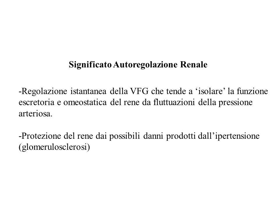 Significato Autoregolazione Renale -Regolazione istantanea della VFG che tende a isolare la funzione escretoria e omeostatica del rene da fluttuazioni