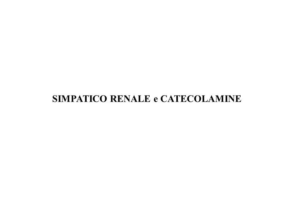 SIMPATICO RENALE e CATECOLAMINE