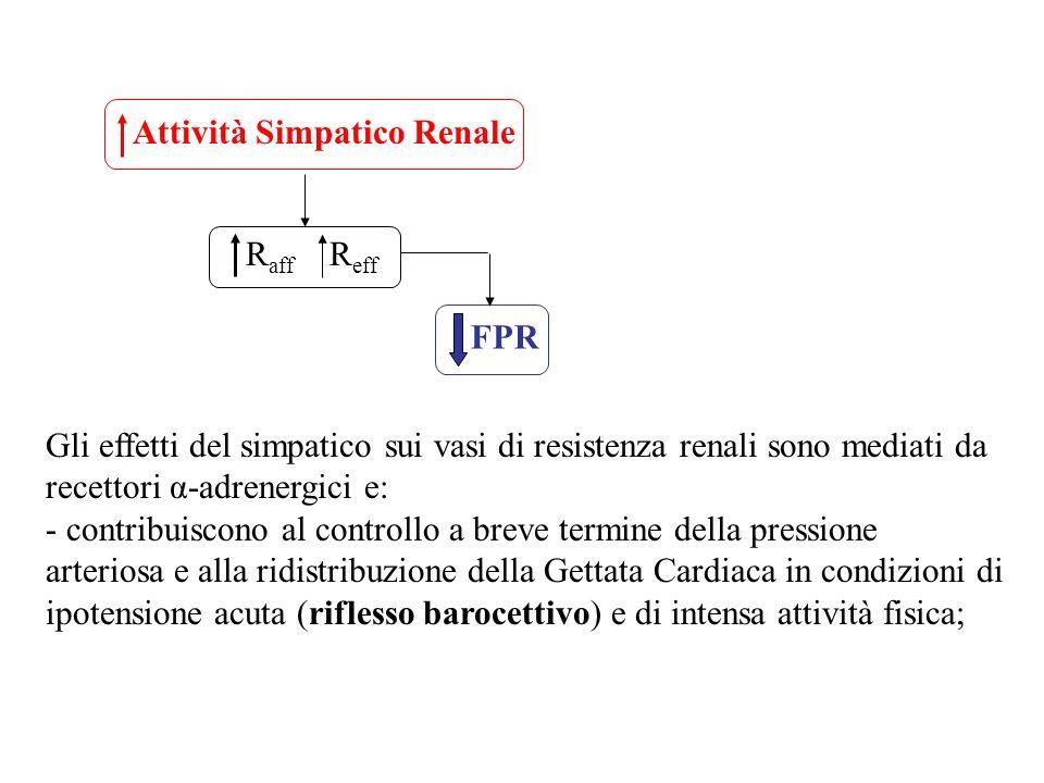 Attività Simpatico Renale R aff R eff FPR Gli effetti del simpatico sui vasi di resistenza renali sono mediati da recettori α-adrenergici e: - contrib