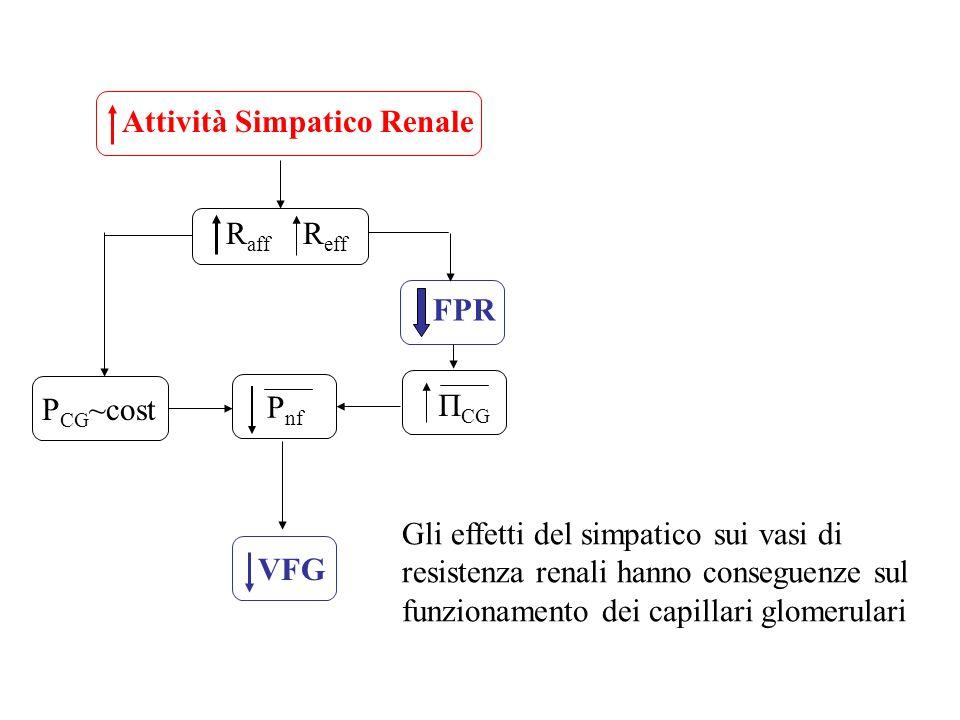 Attività Simpatico Renale R aff R eff P CG ~cost FPR Π CG P nf VFG Gli effetti del simpatico sui vasi di resistenza renali hanno conseguenze sul funzi