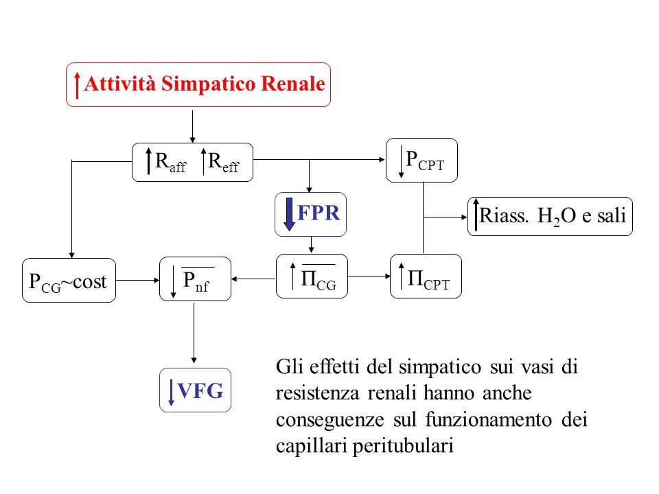 Attività Simpatico Renale R aff R eff P CG ~cost FPR Π CG P nf VFG Π CPT P CPT Riass. H 2 O e sali Gli effetti del simpatico sui vasi di resistenza re