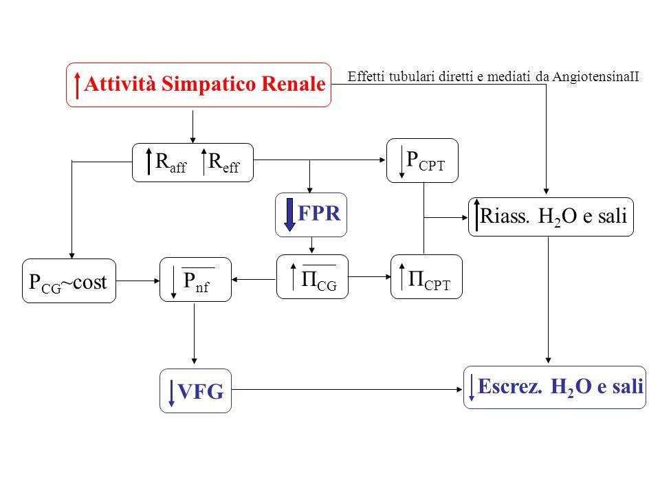 Attività Simpatico Renale R aff R eff P CG ~cost FPR Π CG P nf VFG Π CPT P CPT Riass. H 2 O e sali Escrez. H 2 O e sali Effetti tubulari diretti e med