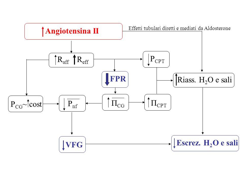 Angiotensina II R aff R eff P CG ~ cost FPR Π CG P nf VFG Π CPT P CPT Riass. H 2 O e sali Escrez. H 2 O e sali Effetti tubulari diretti e mediati da A