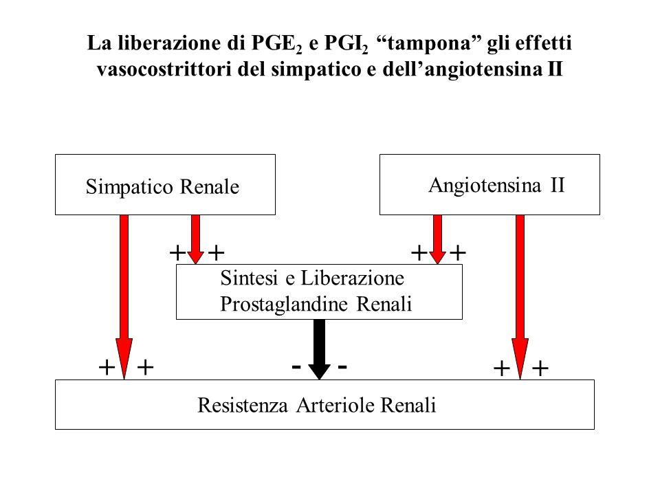 Resistenza Arteriole Renali Sintesi e Liberazione Prostaglandine Renali Simpatico Renale Angiotensina II - + La liberazione di PGE 2 e PGI 2 tampona g