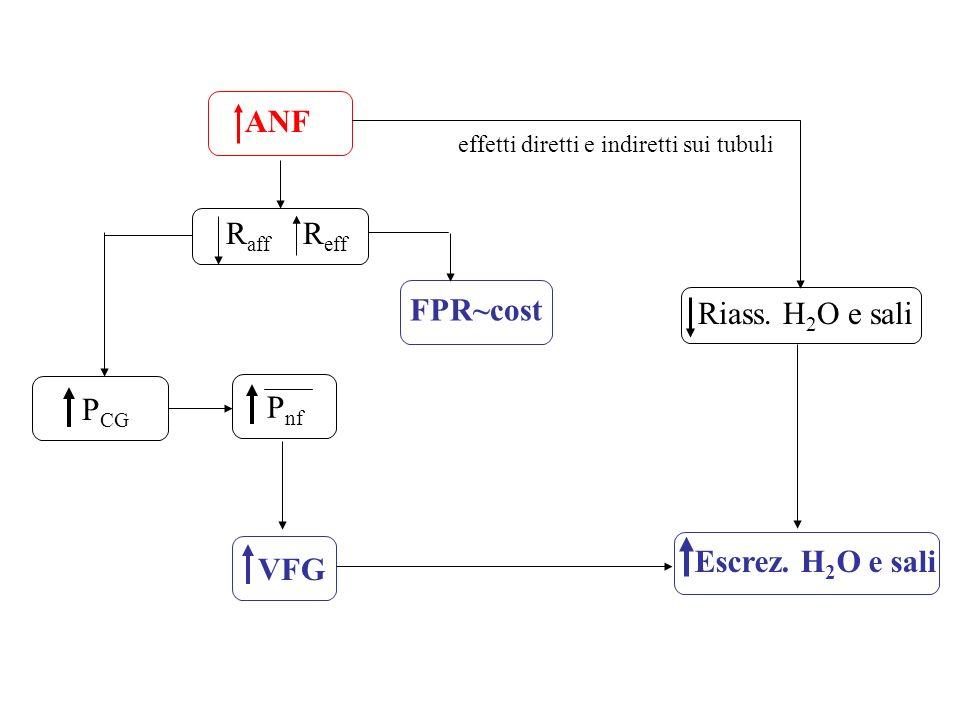 ANF R aff R eff P CG FPR~cost P nf VFG Riass. H 2 O e sali Escrez. H 2 O e sali effetti diretti e indiretti sui tubuli