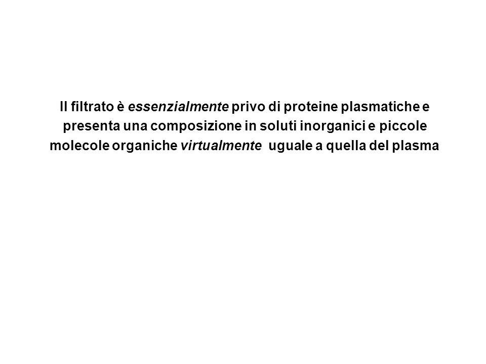 Determinanti della Velocità di Filtrazione Glomerulare VFG = Costante di filtrazione x Pressione netta di filtrazione VFG = K f x P nf K f = superficie filtrante x conduttanza idraulica dei capillari glomerulari P nf = (P CG -P SB ) – σ ( π CG - π SB )