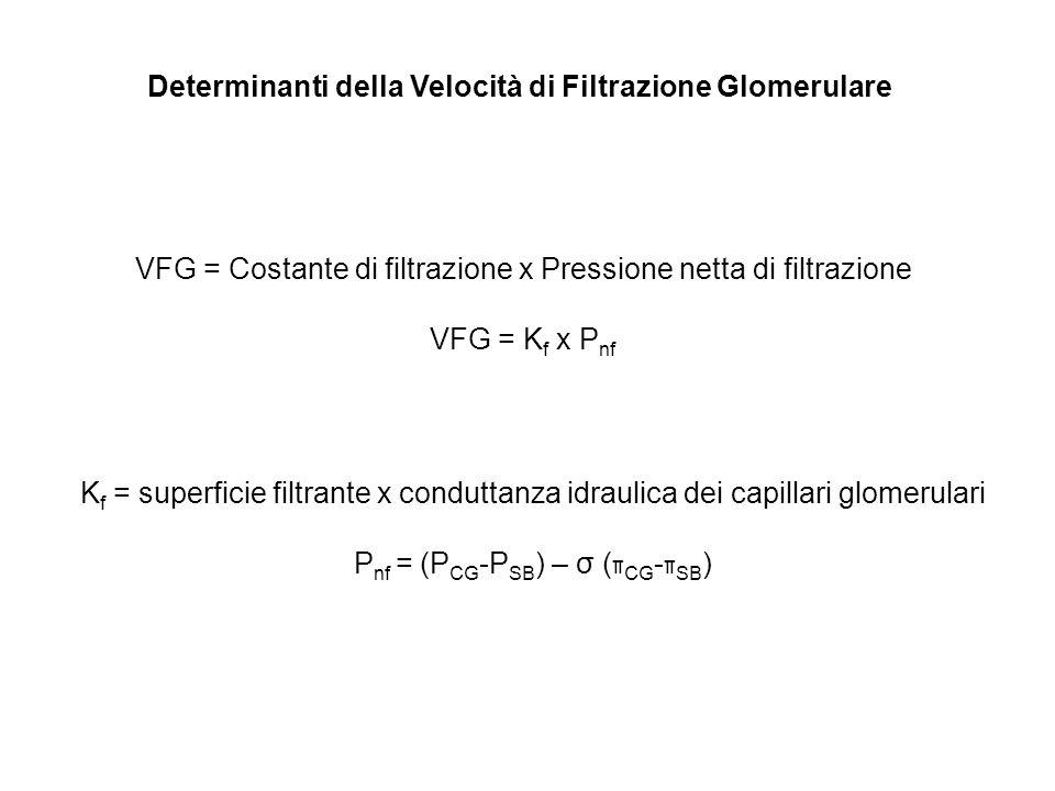 Determinanti della Velocità di Filtrazione Glomerulare VFG = Costante di filtrazione x Pressione netta di filtrazione VFG = K f x P nf K f = superfici