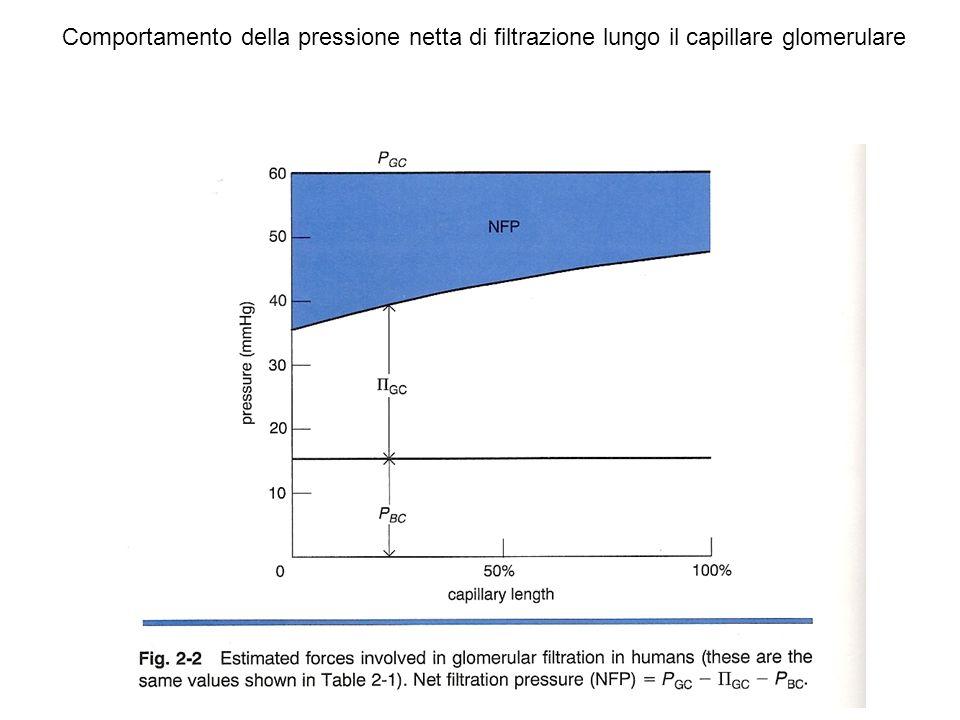 SOMMARIO Mediatore feed-back TG: adenosina Modulatori feed-back TG: angiotensina II NO