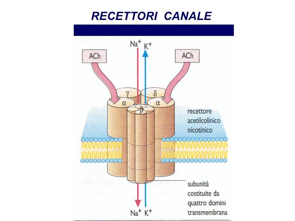 RECETTORI CANALE Recettore nicotinico Farmacologia per immagini Atlante tascabile II Edizione Italiana Lullmann Mohr