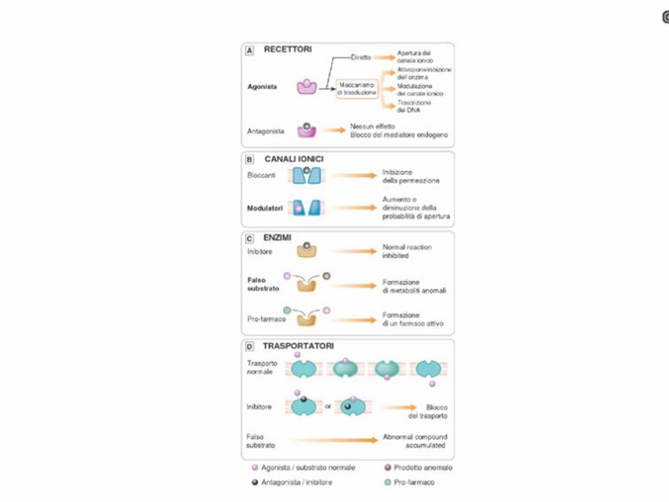 Rappresentazione schematica del recettore GABA B.