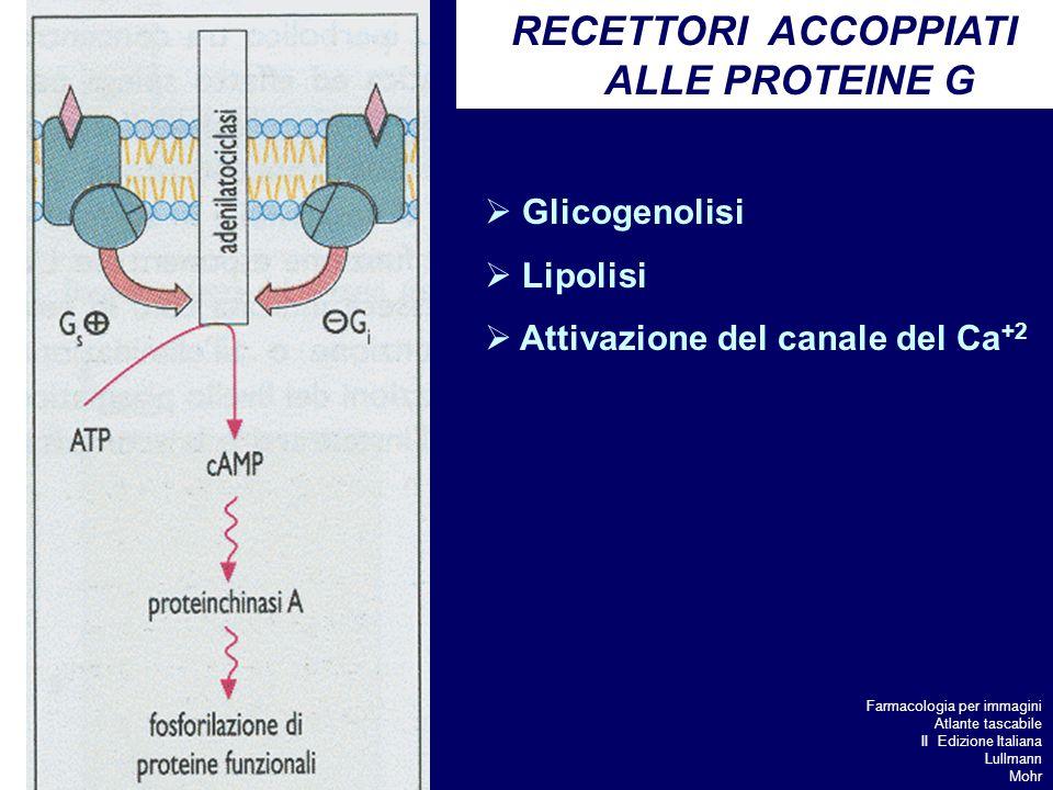 RECETTORI ACCOPPIATI ALLE PROTEINE G Glicogenolisi Lipolisi Attivazione del canale del Ca +2 Farmacologia per immagini Atlante tascabile II Edizione Italiana Lullmann Mohr