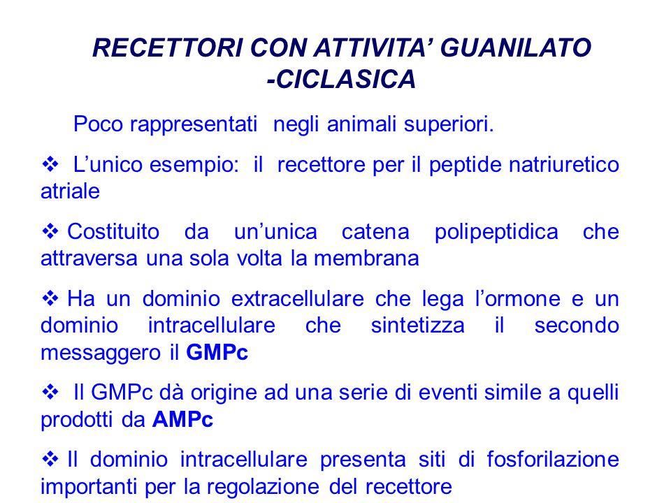RECETTORI CON ATTIVITA GUANILATO -CICLASICA Poco rappresentati negli animali superiori.