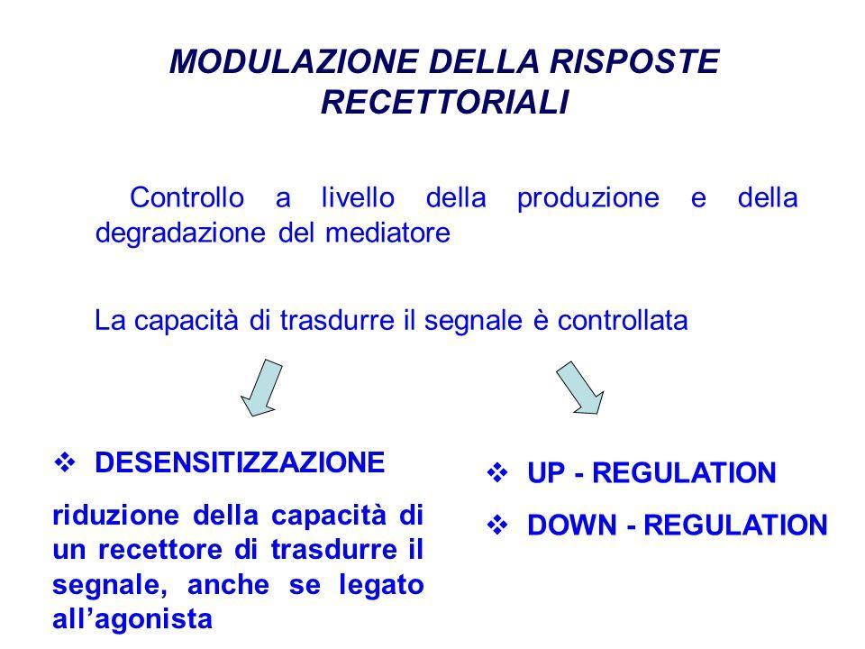Controllo a livello della produzione e della degradazione del mediatore MODULAZIONE DELLA RISPOSTE RECETTORIALI La capacità di trasdurre il segnale è controllata DESENSITIZZAZIONE riduzione della capacità di un recettore di trasdurre il segnale, anche se legato allagonista UP - REGULATION DOWN - REGULATION
