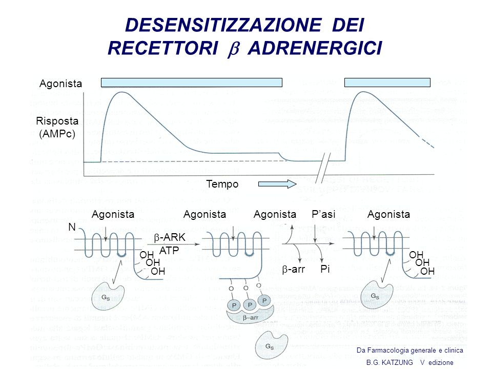 Agonista Tempo Agonista Pasi -arr Agonista N Risposta (AMPc) OH -ARK ATP Pi DESENSITIZZAZIONE DEI RECETTORI ADRENERGICI Da Farmacologia generale e clinica B.G.