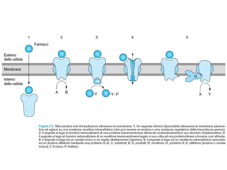 RECETTORI CON ATTIVITA TIROSIN-CHINASICA Farmacologia per immagini Atlante tascabile II Edizione Italiana Lullmann Mohr