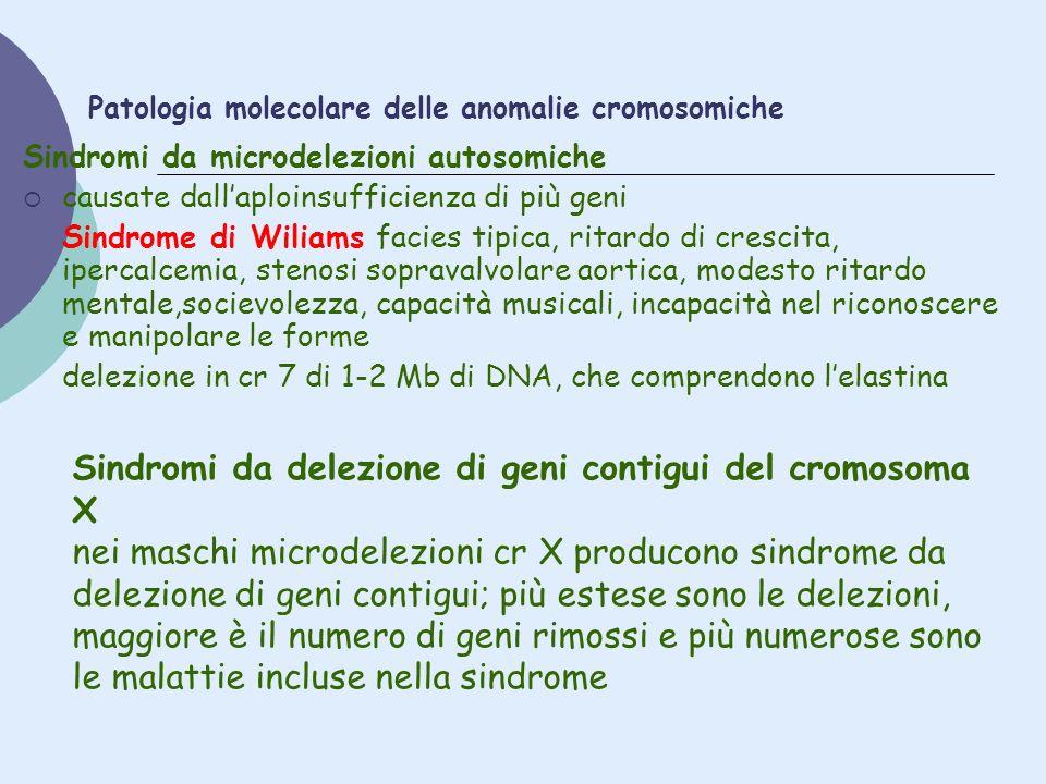 Patologia molecolare delle anomalie cromosomiche Sindromi da microdelezioni autosomiche causate dallaploinsufficienza di più geni Sindrome di Wiliams
