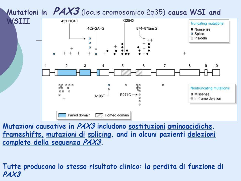 Mutationi in PAX3 (locus cromosomico 2q35) causa WSI and WSIII Mutazioni causative in PAX3 includono sostituzioni aminoacidiche, frameshifts, mutazion