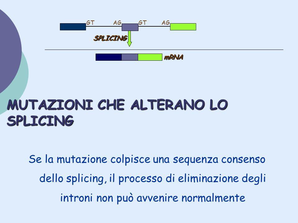 MUTAZIONI CHE ALTERANO LO SPLICING Se la mutazione colpisce una sequenza consenso dello splicing, il processo di eliminazione degli introni non può av