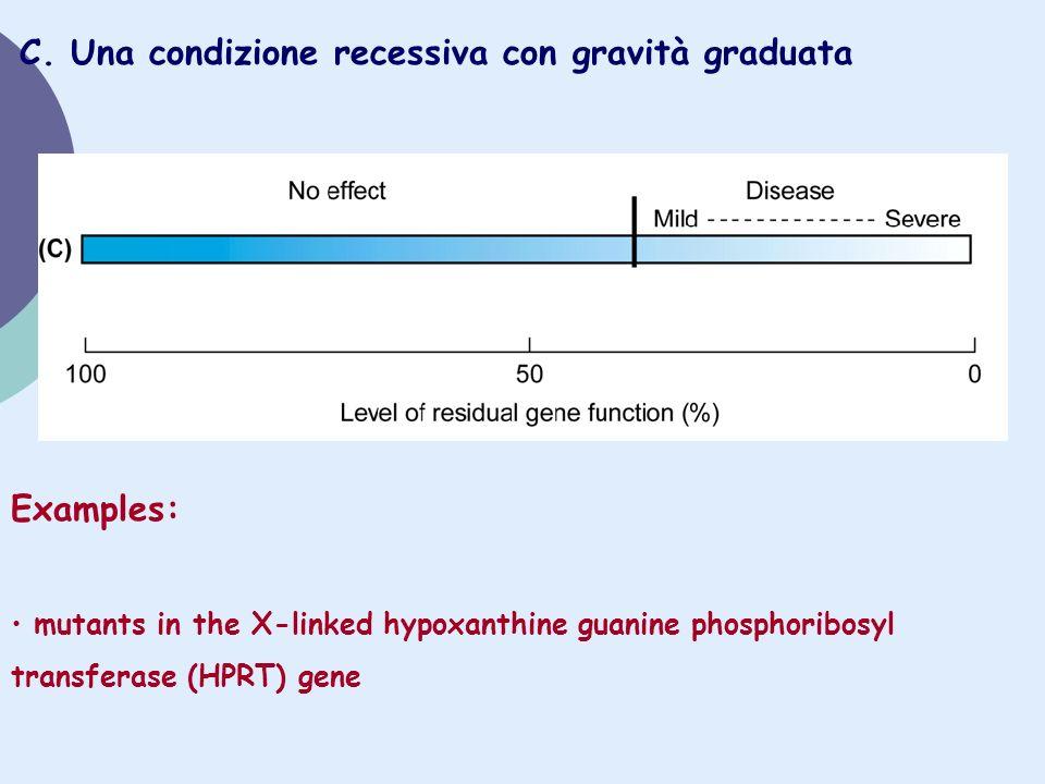 C. Una condizione recessiva con gravità graduata Examples: mutants in the X-linked hypoxanthine guanine phosphoribosyl transferase (HPRT) gene
