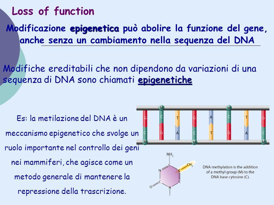 epigenetica Modificazione epigenetica può abolire la funzione del gene, anche senza un cambiamento nella sequenza del DNA Loss of function epigenetich